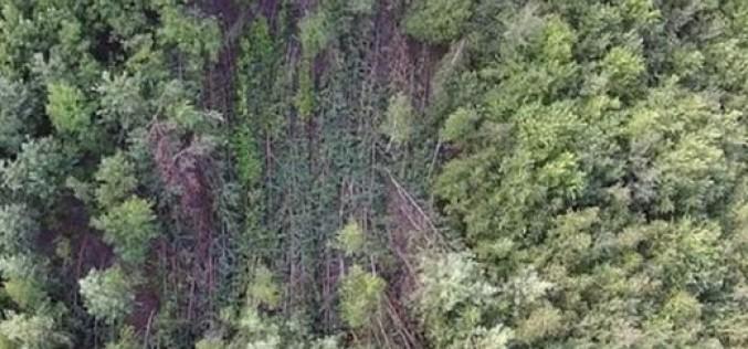 Неизвестна сила повали цяла гора в Сибир