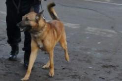 Дворно куче от Баховица щеше да повика по-адекватен отбор