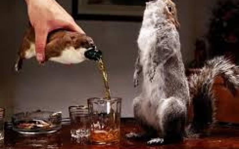 Странни алкохолни питиета