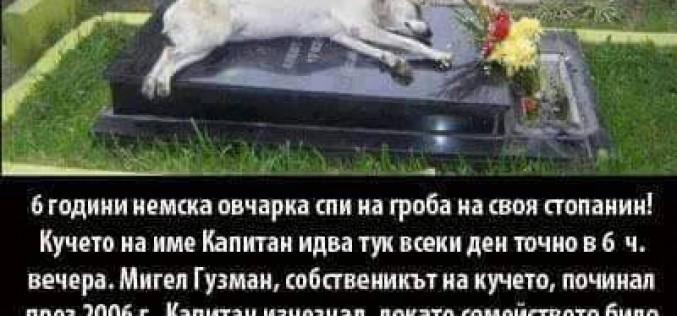 Уникално: Шест години куче спи на гроба на своя стопанин!