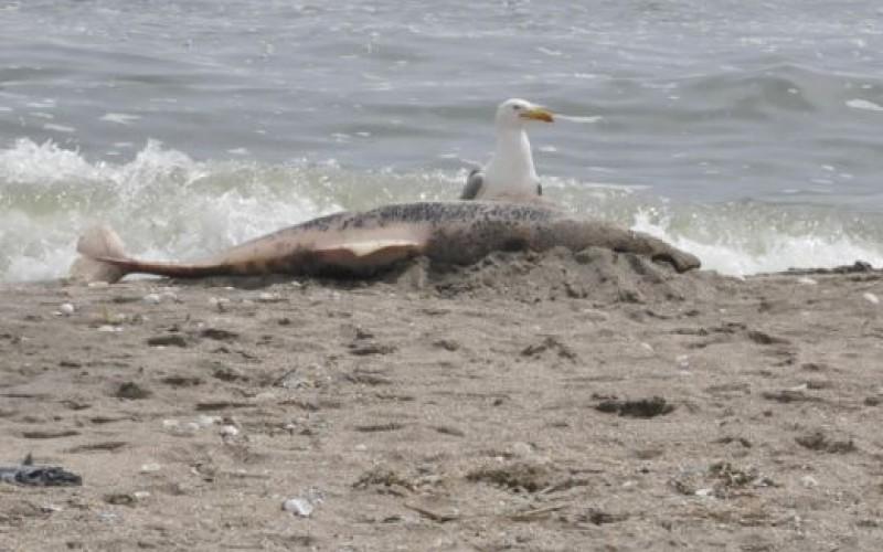 Ужас! Морето изхвърли 76 мъртви делфини!