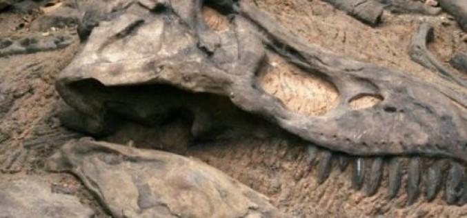 Откриха двойник на тиранозавъра