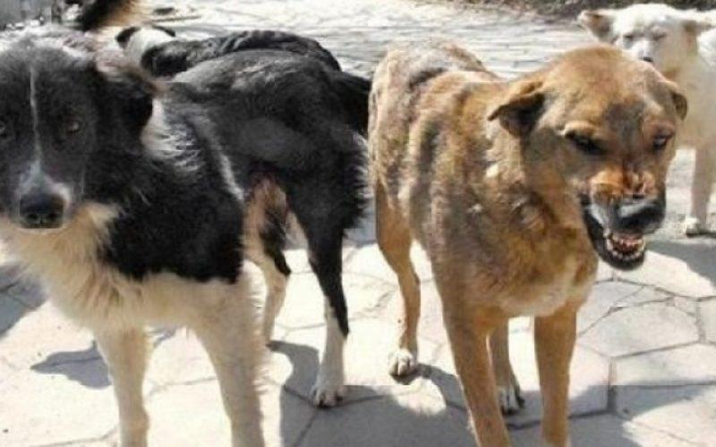 Бездомни кучета плашат гражданите на Елин Пелин