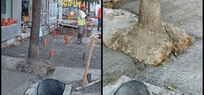 """Беторнирани дървета след ремонта на """"Графа"""""""