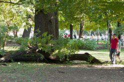 Обществено обсъждане относно премахването на опасни дървета