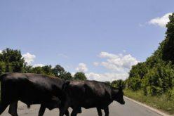Изготвяне на списъци за отглеждани животни на територията на Община Елин Пелин
