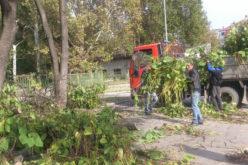 Започна санитарното окастряне на дърветата в парка на гр. Елин Пелин