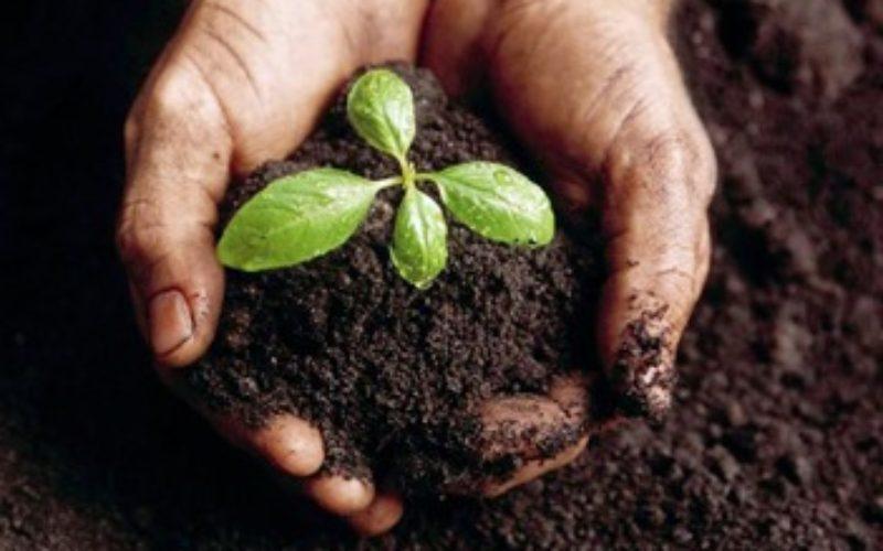 Започна раздаването на компост срещу квитанция за платена такса смет