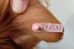 Строги мерки в Елин Пелин срещу стопаните на агресивни кучета