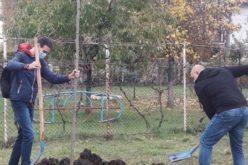 """30 нови дървета засадиха с кампанията """"Моето зелено училище"""" (СНИМКИ)"""