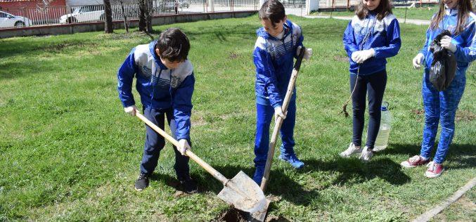 За пример: Млади спортисти от Елин Пелин засадиха дръвчета (СНИМКИ)