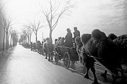 Камилата на батальона или как Кузнечик стигна до Райхстага